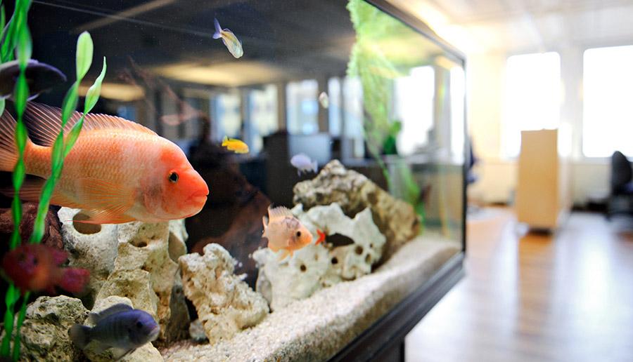 Det första man möts av som besökare hos GHS är deras fina akvarium.